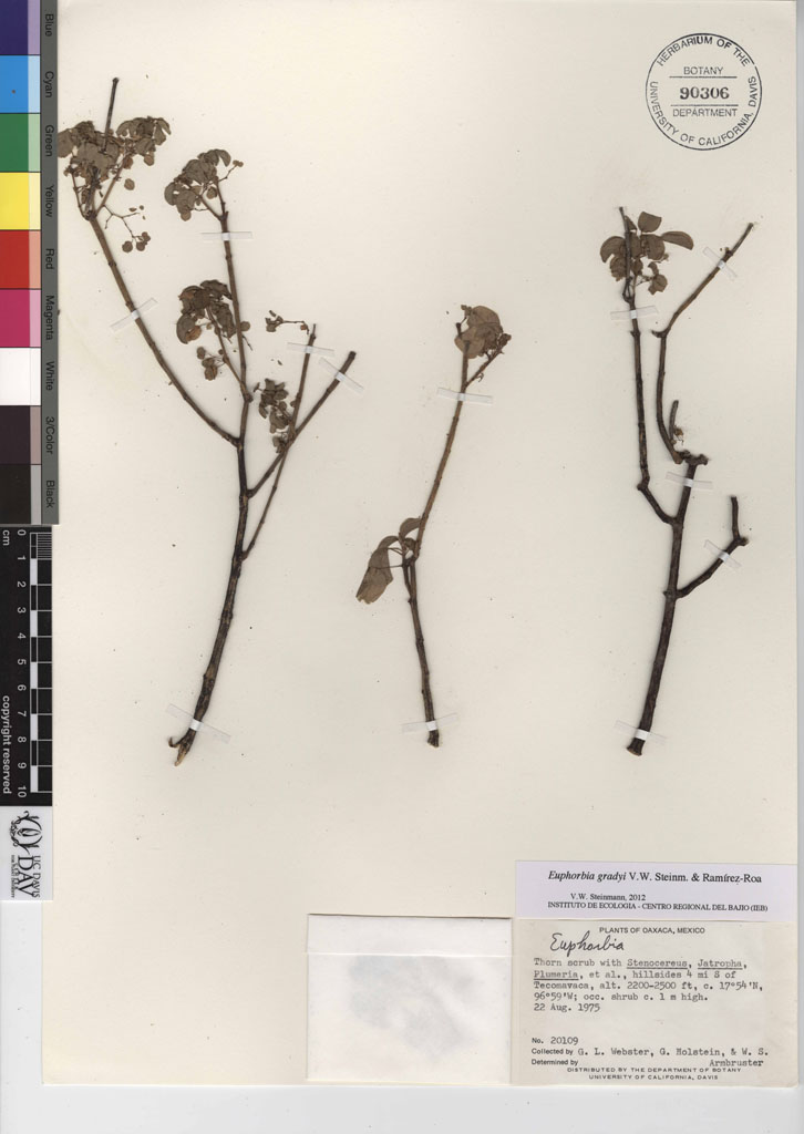 Zoom by hoovering over image area of interest.